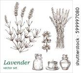 lavender set.  botanical...   Shutterstock .eps vector #599997080