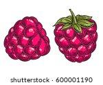 raspberry fruit. superfood...   Shutterstock .eps vector #600001190