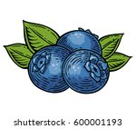 blueberry berry  fruit  leaf ... | Shutterstock .eps vector #600001193