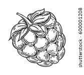 raspberry fruit. superfood...   Shutterstock .eps vector #600001208