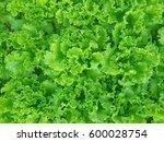 organic vegetables. fresh... | Shutterstock . vector #600028754