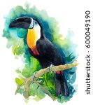 Watercolor illustration with a beautiful tropical bird. Painted toucan on a green background. Zoo illustration with a bird.