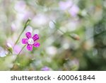 Gypsophila Spring Flower Bloom...