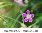 Spring Flower Background Of...