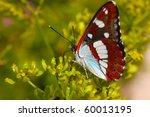 Lopinga Achine Butterfly...