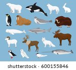 arctic animals collection with... | Shutterstock .eps vector #600155846