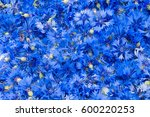 Blue Flowers Cornflowers