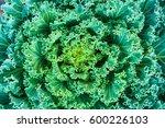 Close Up Natural Fresh Green...