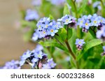 Bright Bunches Of Blue Flowers...