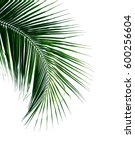 palm or coconut leaves isolated ... | Shutterstock . vector #600256604