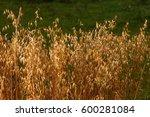 oats | Shutterstock . vector #600281084