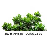 green leaves isolated on white... | Shutterstock . vector #600312638