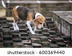 beagle dogs | Shutterstock . vector #600369440