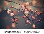 springtime. beautiful flowering ... | Shutterstock . vector #600407060