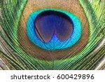 Macro Peacocks Feather