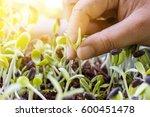 hand women pulling seedlings of ...   Shutterstock . vector #600451478