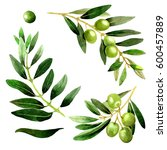olive tree in a watercolor... | Shutterstock . vector #600457889