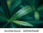 green leaf leaves background... | Shutterstock . vector #600465668