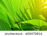 stripes of tropical palm leaves ...   Shutterstock . vector #600470816