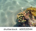 coral reef formation on the sea ... | Shutterstock . vector #600520544