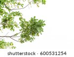 green leaves isolated on white... | Shutterstock . vector #600531254