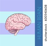 human brain | Shutterstock .eps vector #600540608