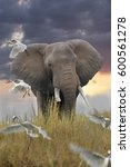 Small photo of African elephant, bull in the steppe, Loxotonta africana