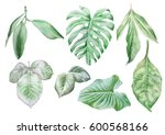 set with leaves. watercolor... | Shutterstock . vector #600568166