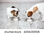 Stock photo pet eating foot dog and cat eats food from bowl 600630008
