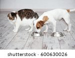 Stock photo pet eating foot cat and dog eats food from bowl 600630026