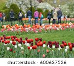 colorful tulips in the grounds... | Shutterstock . vector #600637526