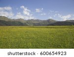 alpine blooming meadow on a... | Shutterstock . vector #600654923