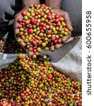 grains of ripe coffee in the... | Shutterstock . vector #600655958