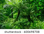 Tropical Forest Portugal