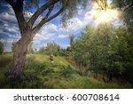 summer landscape tree in the...   Shutterstock . vector #600708614
