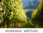 Vineyard in Southwest Germany Rhineland Palatinate in Summer - stock photo