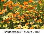 Orange And Yellow Wild Flowers...