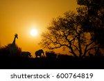 golden sunset in south africa... | Shutterstock . vector #600764819