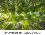the bamboo groves of arashiyama ... | Shutterstock . vector #600784430