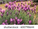 beautiful pink purple flowers...   Shutterstock . vector #600798644