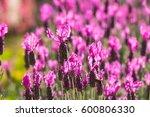 Beautiful Pink Purple Flowers...