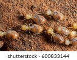 termites insects in colony over ... | Shutterstock . vector #600833144
