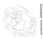 amazing parrots line art... | Shutterstock .eps vector #600848528