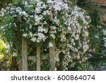 beautiful scented white nepal... | Shutterstock . vector #600864074