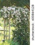 beautiful scented white nepal...   Shutterstock . vector #600864128