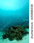 Small photo of underwater scene schooling fish aceh indonesia scuba