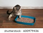 Cute Cat In Plastic Litter Box...