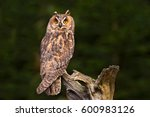 long eared owl sitting on the... | Shutterstock . vector #600983126