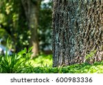 Tree Trunk With Fractal Textur...