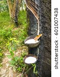 Small photo of Milk latex from rubber tree in a bowl at the rubber plantation of agriculturist in Indonesia